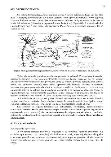 8 Filo Echinodermata - Laboratório de Biologia - IFSC