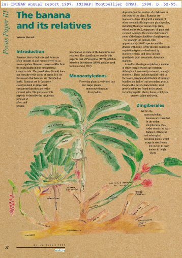 The banana and its relatives - Musalit
