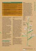 The banana and its relatives - Musalit - Page 2