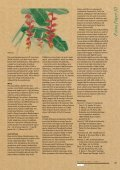 The banana and its relatives - Musalit - Page 4
