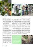 Palmen im Schwarzwald DEGA Dezember 2010 - Jürgen ... - Seite 3