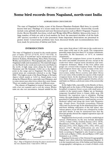 Some bird records from Nagaland, north-eastern ... - Oriental Bird Club