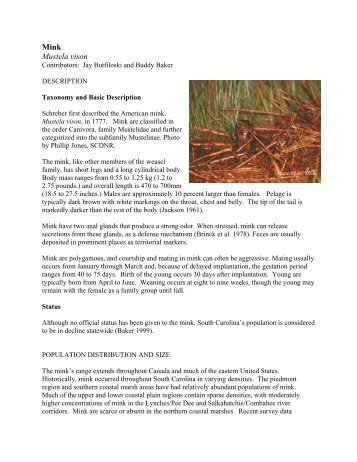 Mink Mustela vison - Department of Natural Resources