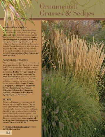 Grasses-Helleborus - Proven Winners