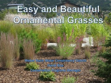 Grouping Grasses