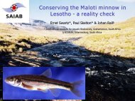 Conserving the Maloti minnow in Lesotho - Waternet contents page