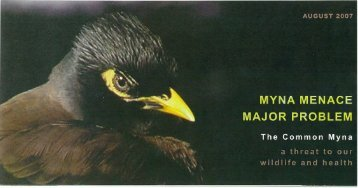 Myna Menace: A Threat to Our Wildlife and