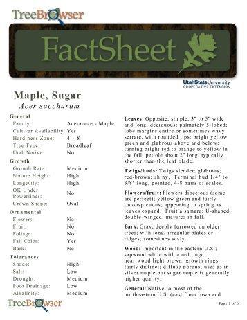 Maple, Sugar - USU Tree Browser