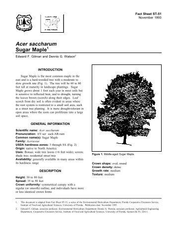 Acer saccharum Sugar Maple - Environmental Horticulture ...