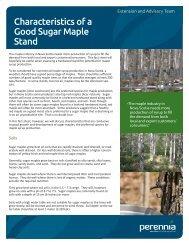 Characteristics of a Good Sugar Maple Stand - Perennia