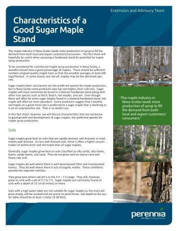 Characteristics of a Good Sugar Maple Stand - Perennia