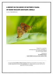 A REPORT ON THE SURVEY OF BUTTERFLY FAUNA OF IDUKKI ...