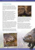 Beaver-Summary-report-English - Page 6