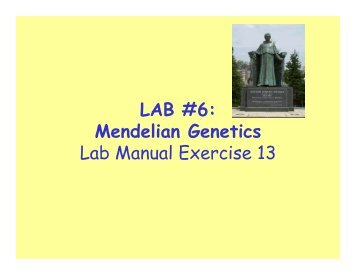 Printables Non Mendelian Genetics Worksheet non mendelian genetics worksheet student form of and squares on ca us population ge ics along with answer key