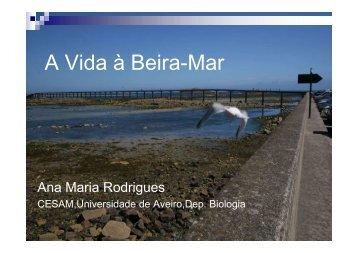 A Vida à Beira-Mar [Modo de Compatibilidade]