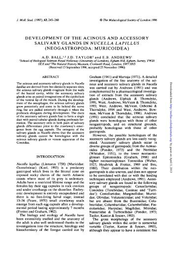development of the acinous and accessory salivary glands in ...
