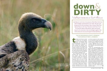 Vulture research in East Africa