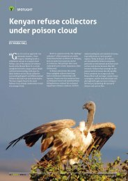 Kenyan refuse collectors under poison cloud - The Peregrine Fund