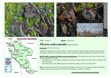 Plicaria endocarpoides (Berkeley)Rifai