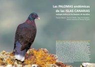 Las PALOMAS endémicas de las ISLAS CANARIAS - IPNA-CSIC