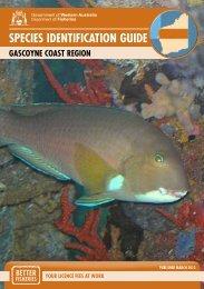 Species Identification Guide - Gascoyne Coast Region