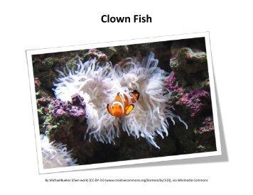 2nd Grade Science - Animal Adaptations Visual Aids (PDF