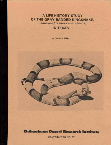 A LIFE HISTORY STUDY OF THE GRAY-BANDED KINGSNAKE ...