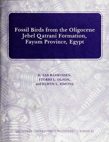 Fossil Birds from the Oligocene Jebel Q^atrani - Smithsonian ...
