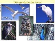 Diversidade de Aves 1