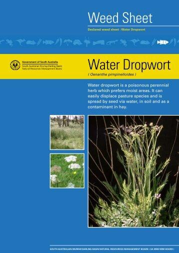 Water Dropwort South Australian Murray Darling Basin Natural