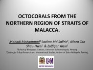 OCTOCORALS FROM THE NORTHERN REGION OF STRAITS OF ...