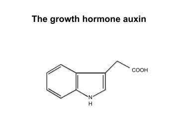 The growth hormone auxin - Auxin Evo Devo