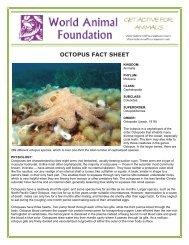 OCTOPUS FACT SHEET - World Animal Foundation