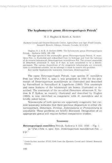Hyphomycetes Classification Essay - image 5