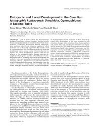 Embryonic and Larval Development in the Caecilian Ichthyophis ...