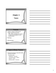 Chapter 4 Skin And Body Membranes Worksheet Answers