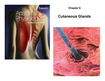 Chapter 6 Cutaneous Glands