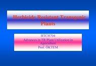 Herbicide Resistant Transgenic Plants