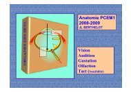 Vision Audition Gustation Olfaction Anatomie PCEM1 2008-2009