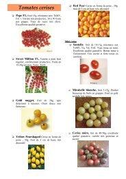 Tomates cerises - Petitluberon.com