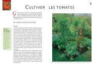 CULTIVER LES TOMATES - Ulmer