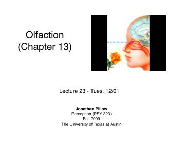 Olfaction (Chapter 13) - The University of Texas at Austin