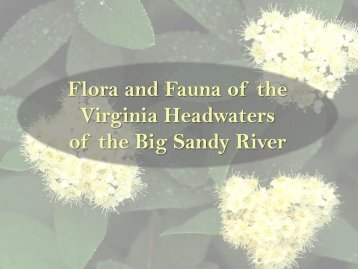 Flora and Fauna of the Virginia Headwaters of the Big Sandy River