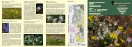 Infoblatt Frühblüher - Botanischer Garten Erlangen