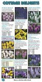 Bulbs of distinction since 1917 - daffodil bulbs - Page 6