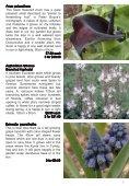 LambLey Nursery - Page 7