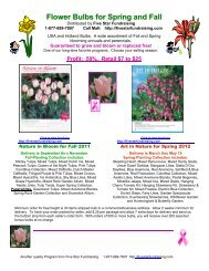 Flower Bulbs for Spring and Fall - Five Star Fundraising