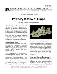 Powdery Mildew of Grape - University of Kentucky
