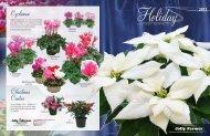 Holiday Catalog » Finished Poinsettias - Jolly Farmer