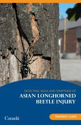 Detecting Signs and Symptoms of Asian Longhorned Beetle Injury